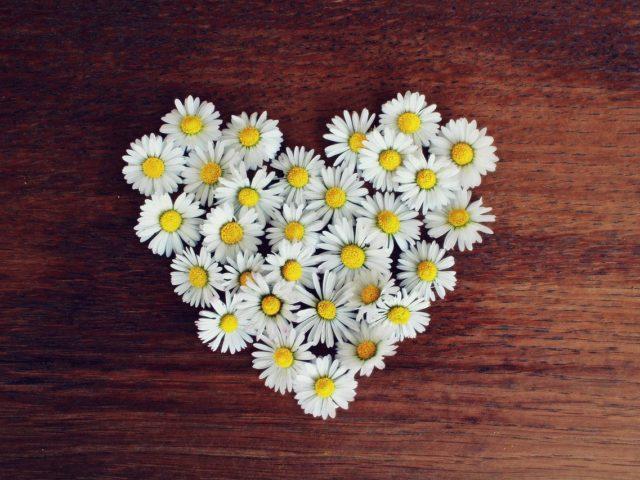 ハートの形をした花びら