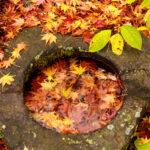 秋の紅葉の葉っぱ